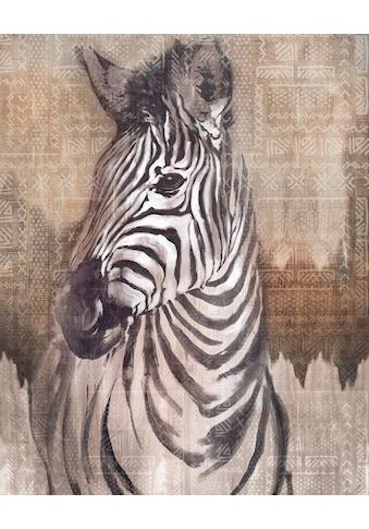 KOMAR Fototapete »Zebra«, Grösse: 200 x 250 cm kaufen