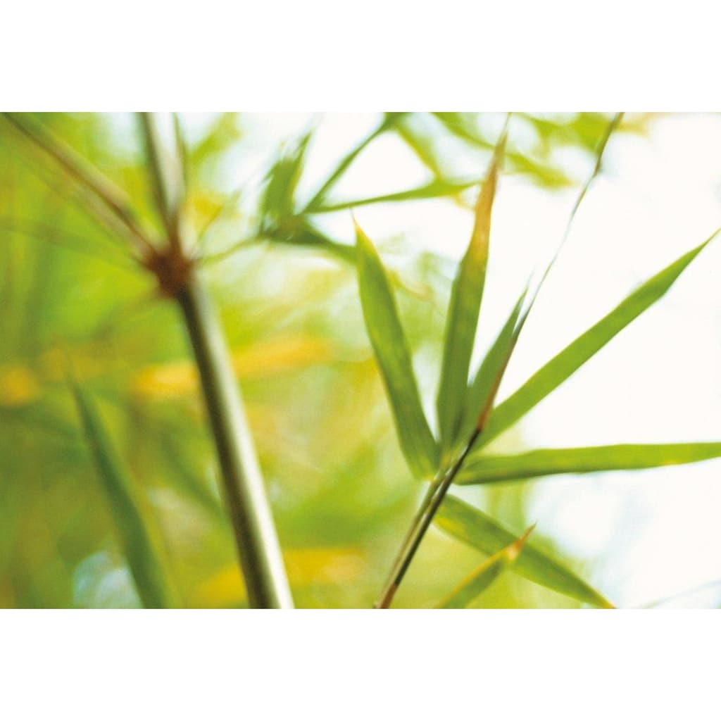 billerbeck Naturfaserbettdecke »Bambusduvet, Billerbeck, »Bamboo UNO««, Füllung 100% Baumwolle, Feingewebe mit Bienenwachsveredelung, Öko-Tex Standard 100, Bezug 100% Bambus (Viskose-Faser), (1 St.)