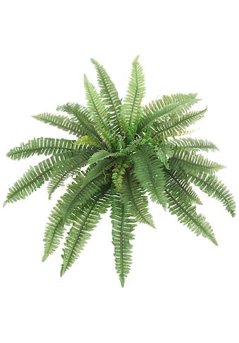 Creativ green Kunstpflanze »Boston Farn« (1 Stück) kaufen