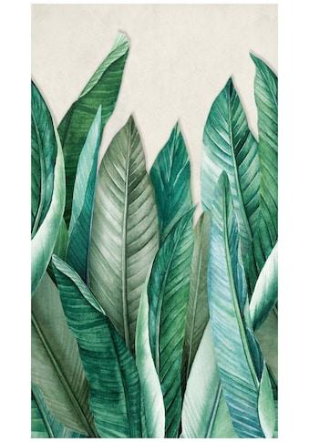 BODENMEISTER Fototapete »Bananenblätter Dschungel grün«, Rolle 2,80x1,59m kaufen