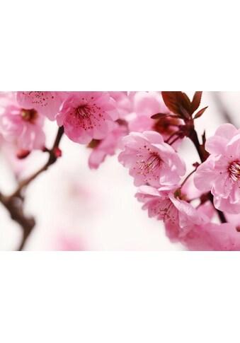 Fototapete »Peach Blossom«, Home affaire kaufen