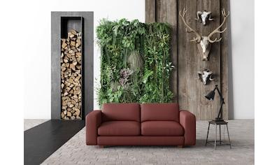 machalke® 2,5-Sitzer »valentino«, mit breiten Armlehnen, Füsse Walnuss, Breite 191 cm,... kaufen