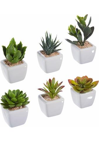 Kunstpflanze (Set, 6 Stück) kaufen