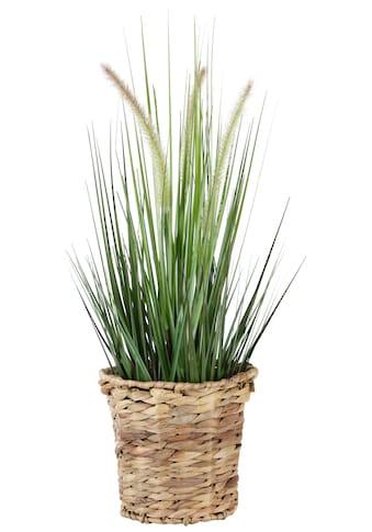 Kunstpflanze »Gras« kaufen