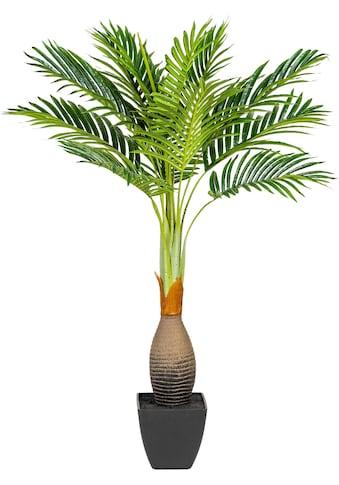 Creativ green Kunstpalme »Kentiapalme« kaufen