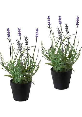 Creativ green Kunstpflanze »Lavendel«, 3er Set, im Kunststofftopf kaufen
