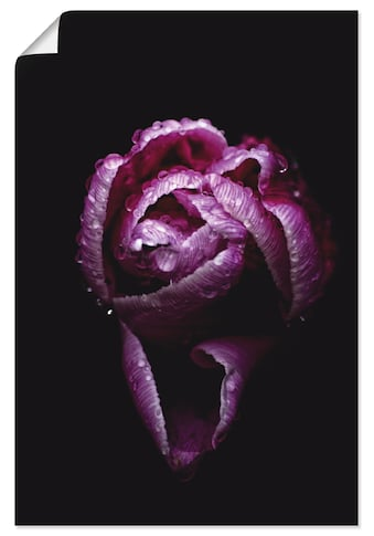Artland Wandbild »Tulpe«, Blumen, (1 St.), in vielen Grössen & Produktarten - Alubild / Outdoorbild für den Aussenbereich, Leinwandbild, Poster, Wandaufkleber / Wandtattoo auch für Badezimmer geeignet kaufen