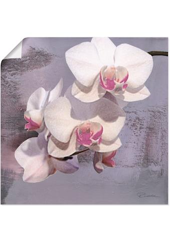 Artland Wandbild »Orchideen vor Violett II«, Blumen, (1 St.), in vielen Grössen & Produktarten - Alubild / Outdoorbild für den Aussenbereich, Leinwandbild, Poster, Wandaufkleber / Wandtattoo auch für Badezimmer geeignet kaufen