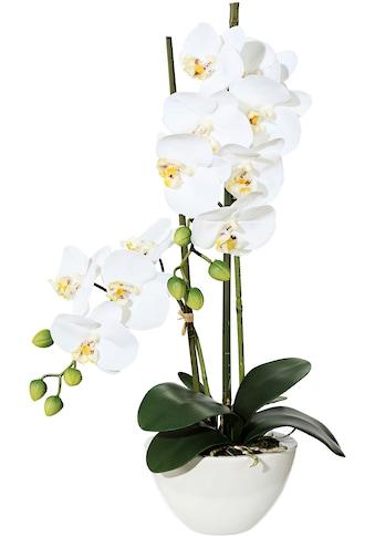 Creativ green Kunstpflanze »Orchidee« kaufen