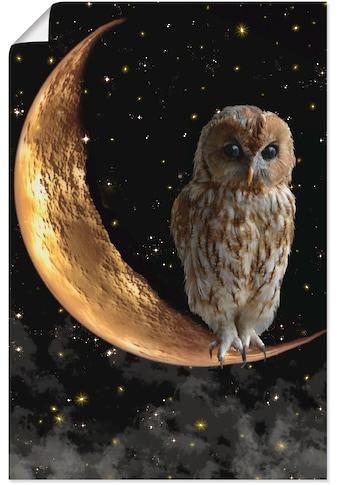 Artland Wandbild »Nachteule« kaufen