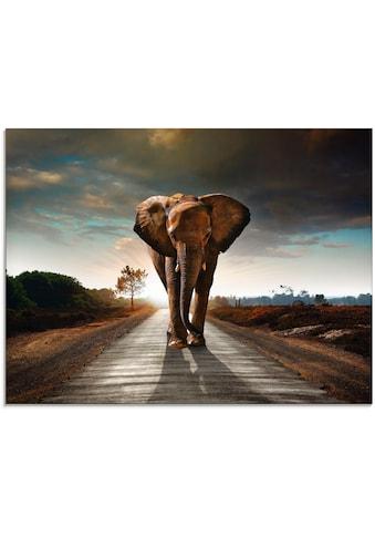 Artland Glasbild »Ein Elefant läuft auf der Strasse« kaufen
