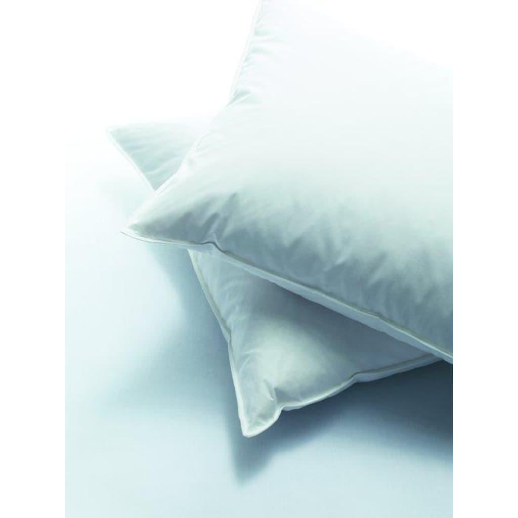billerbeck Kunstfaserkopfkissen »Softy«, Füllung: 70% Polyester, 30% Lyocell, AIRTECmicro®, Bezug: 100% Baumwolle, (1 St.)