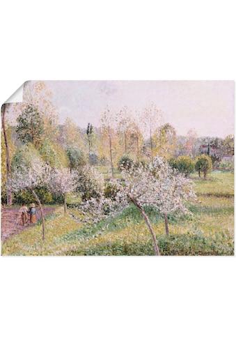 Artland Wandbild »Blühende Apfelbäume in Eragny. 1895«, Wiesen & Bäume, (1 St.), in vielen Grössen & Produktarten -Leinwandbild, Poster, Wandaufkleber / Wandtattoo auch für Badezimmer geeignet kaufen
