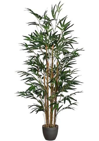 Creativ green Kunstpflanze »Bambus« kaufen