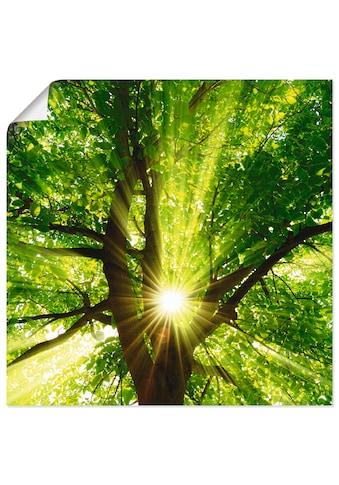 Artland Wandbild »Sonne strahlt explosiv durch den Baum«, Bäume, (1 St.), in vielen Grössen & Produktarten - Alubild / Outdoorbild für den Aussenbereich, Leinwandbild, Poster, Wandaufkleber / Wandtattoo auch für Badezimmer geeignet kaufen