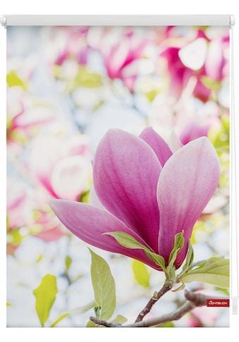LICHTBLICK Seitenzugrollo »Klemmfix Motiv Magnolie«, Lichtschutz, ohne Bohren, freihängend, bedruckt kaufen