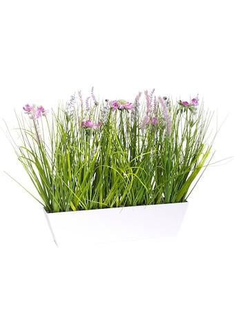 Botanic-Haus Kunstblume »Wiesenblumen im Kunststofftopf« kaufen