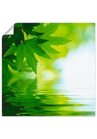 Artland Wandbild »Grüne Blätter reflektieren im Wasser«, Blätter, (1 St.), in vielen Grössen & Produktarten - Alubild / Outdoorbild für den Aussenbereich, Leinwandbild, Poster, Wandaufkleber / Wandtattoo auch für Badezimmer geeignet kaufen