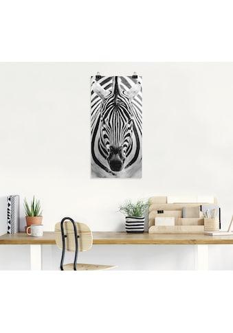 Artland Wandbild »Zebra« kaufen