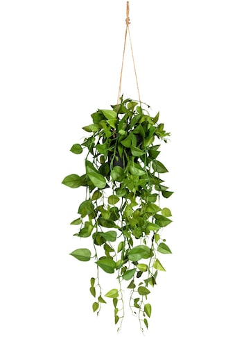 Creativ green Kunstranke »Philodendronhänger«, im Hängetopf kaufen
