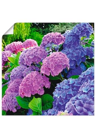 Artland Wandbild »Hortensien im Garten«, Blumen, (1 St.), in vielen Grössen &... kaufen