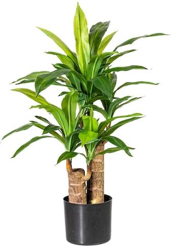 Home affaire Künstliche Zimmerpflanze »Corentin« kaufen