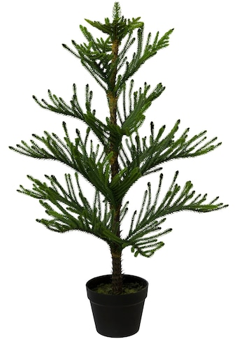 Creativ green Kunstpflanze »Araucarienbaum«, im Kunststofftopf kaufen