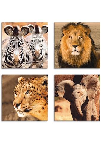Artland Leinwandbild »Zebras Löwe Schneeleopard Elefanten« kaufen