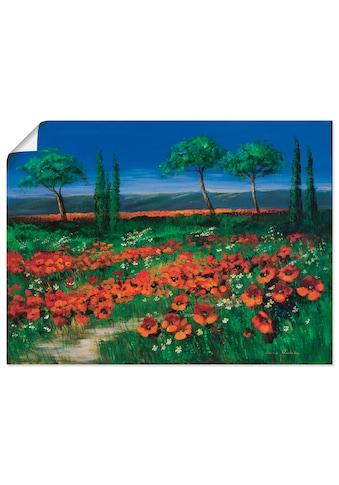 Artland Wandbild »Primelfeld«, Blumen, (1 St.), in vielen Grössen & Produktarten -Leinwandbild, Poster, Wandaufkleber / Wandtattoo auch für Badezimmer geeignet kaufen