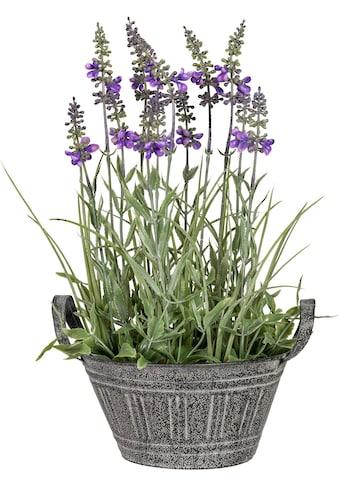 Creativ green Kunstpflanze »Lavendel« (1 Stück) kaufen