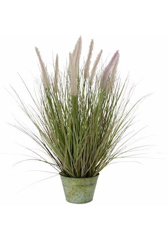Kunstpflanze »Fuchsschwanzgras« kaufen