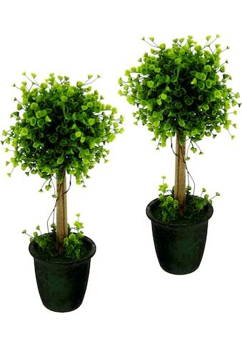 I.GE.A. Kunstbaum »Buchskugelbaum«, im Kunststofftopf, 2er Set kaufen